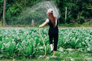 How to Choose A Hose for Garden Irrigation