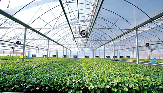 Lesso Lesso and Guangzhou Tianying signed the contract for establishing Lesso Tianying, officially entering agriculture industry on June 21, 2019.
